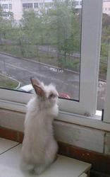Продам декоративного кролика мальчик